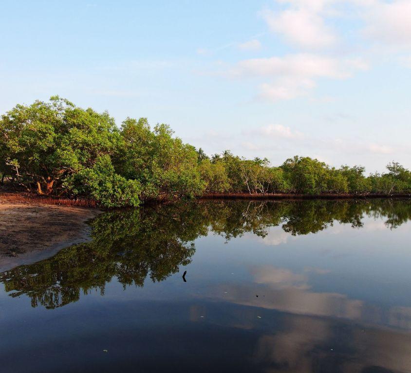 The mangroves of Gazi Bay